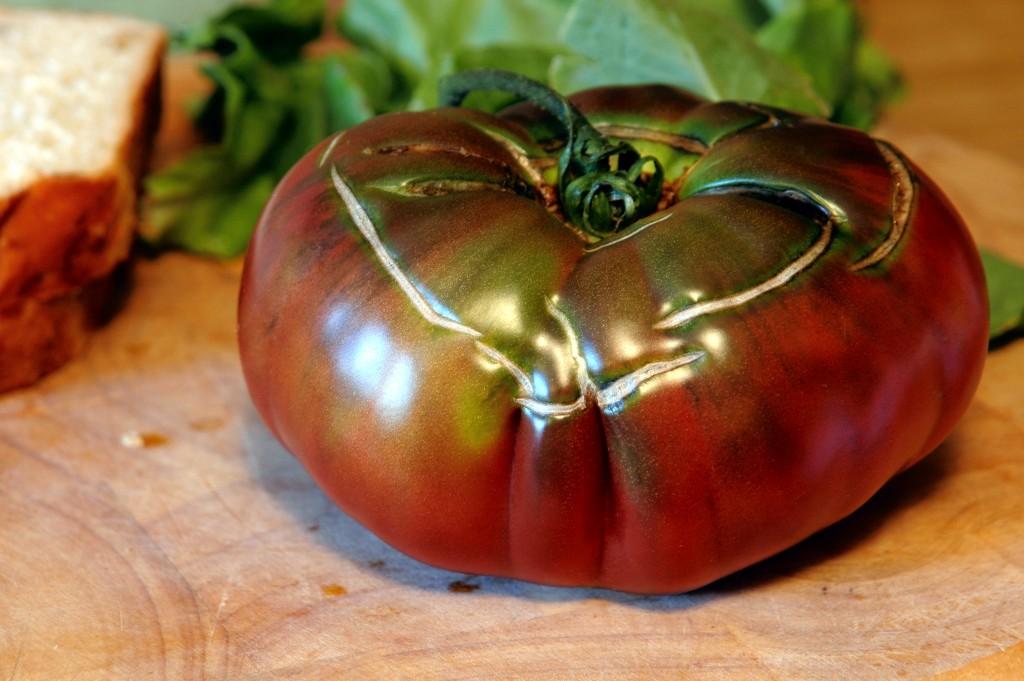 toasted-tomato-sandwich_2795671167_o